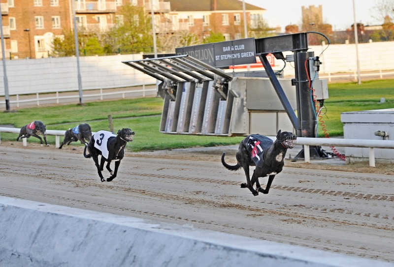 Ballydoyle Honey (Trap 3) chases home Droopys Streak.